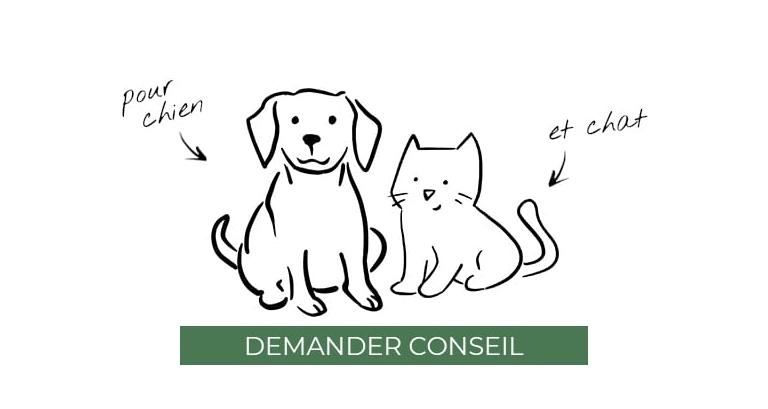conseil-nutrition-chien-et-chat.jpg
