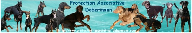 ASSOCIATION PROTECTION DOBERMANN