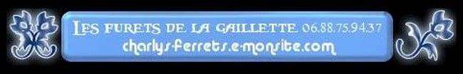 Elevage de FURETS  DE LA GAILLETTE