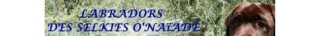 LES LABRADORS  DES SELKIES O' NAIADE
